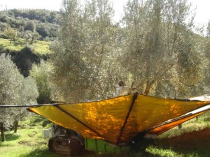 機械によるオリーヴの収穫(イタリアカラブリア州)