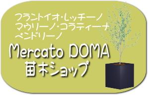 Mercato DOMA苗木ショップ
