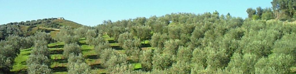 oilfarm